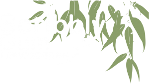 Scribbly Gum Landscapes